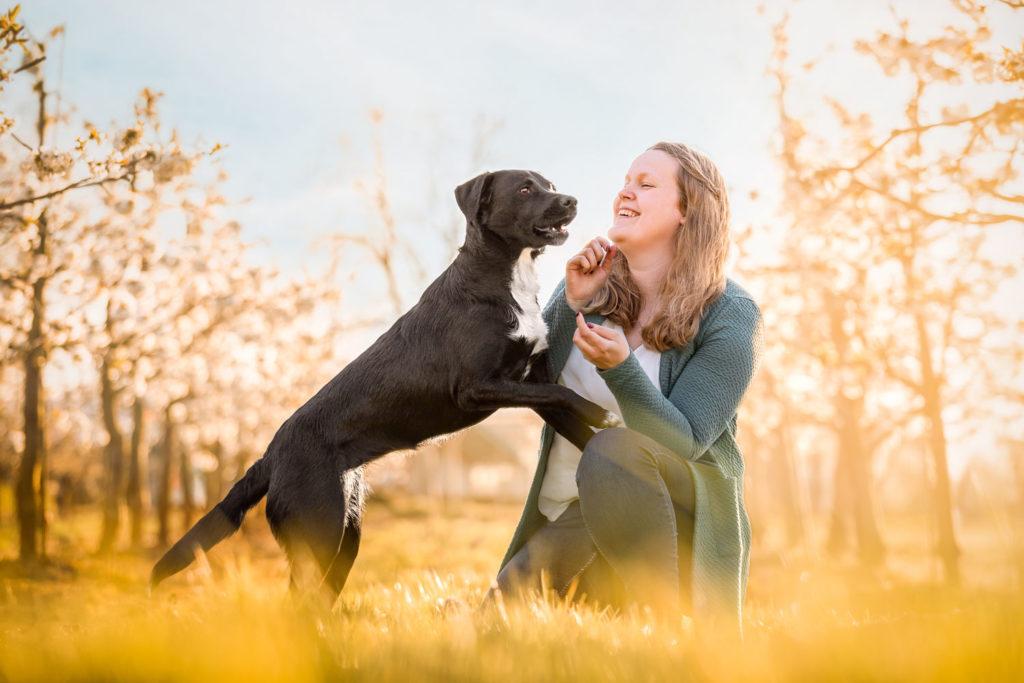 Portrait einer schwarzen Labrador-Border-Collie-Mischlings-Hündin mit Frau vor Kirschblueten - Hunde Fotoshooting
