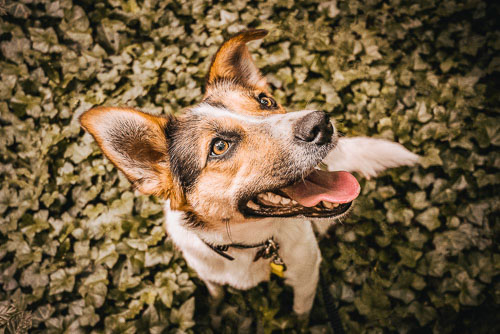 Portrait einer Mischlingshündin im Wald- vorher-nachher - Hundefotografie Bremen