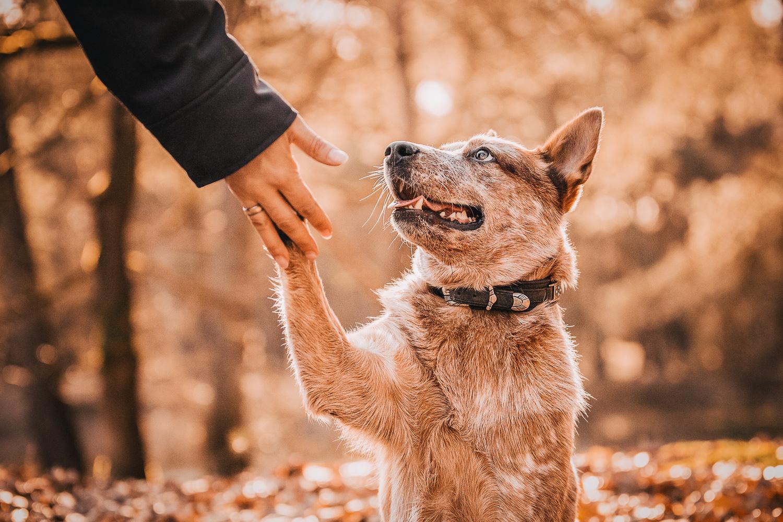 Mensch-Hund-Portrait mit einem Australian-Cattle-Dog - Tierfotografie Bremen