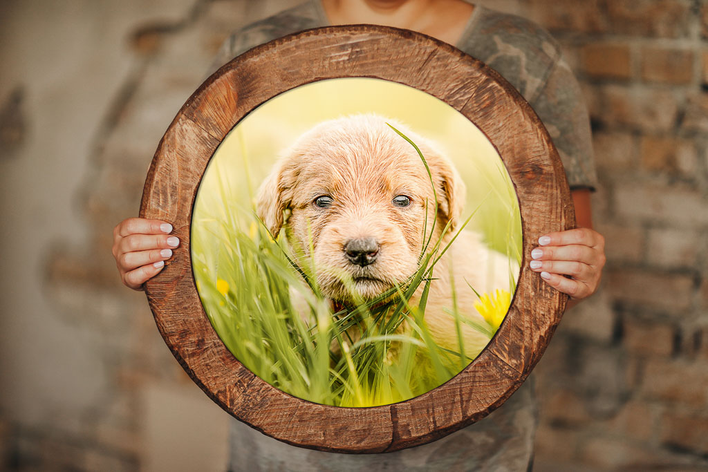 Rundes Holzbild mit Hund im Massivholzrahmen - Bilderrahmen Bremen