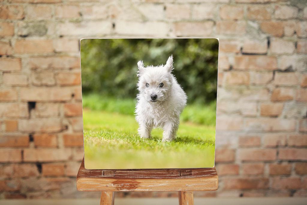 Holzbild quadratisch mit Hund - Bilderrahmen Bremen