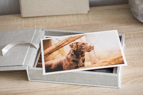 Fine Art Print auf einer grauen Fotobox - Hundefotografie Preise