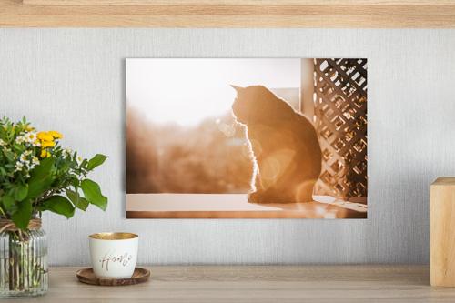 crylglas-Wandbild einer Katze über einer Kommode - Hundeshooting Preise