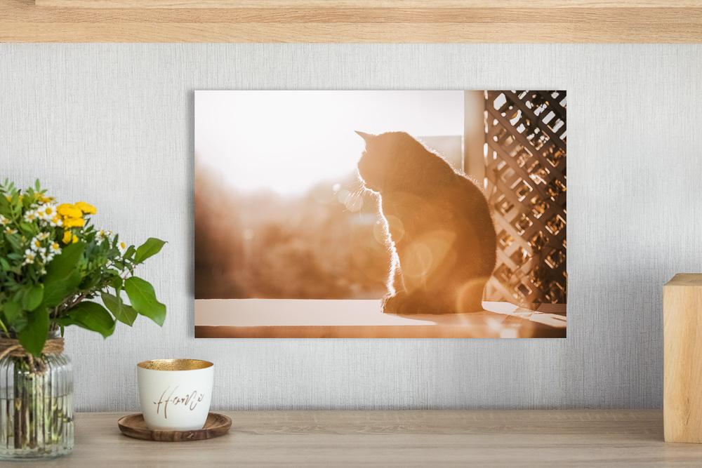 Foto unter Acrylglas an grauer Wand - Wandbild Tier