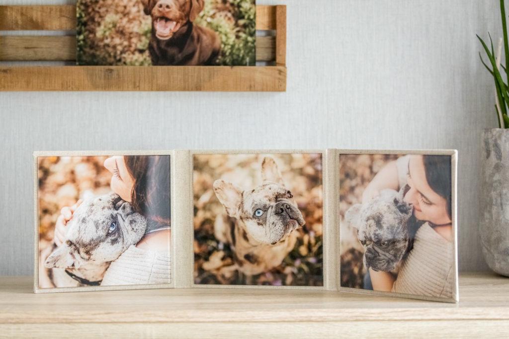 Acrylglas-Triplex mit drei Hundefotos auf einer Kommode - Wandbild Tier