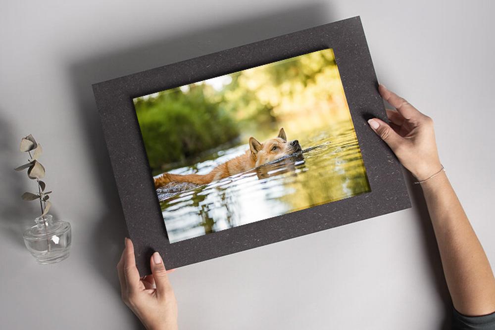 Acrylglas schwebend wird in den Händen gehalten - Wandbild Tier