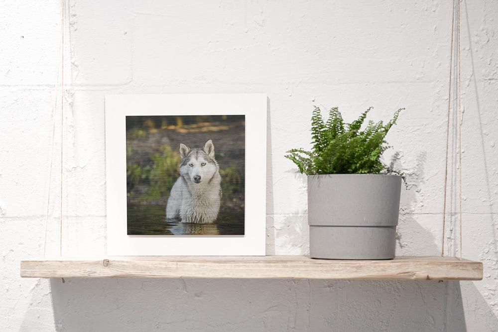 Hundefoto auf Alu Dibond auf einem Regal - Wandbild Tier