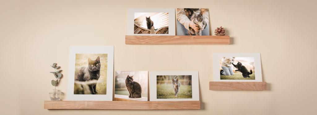 3 verschiedene Bilderleisten an einer Wand mit Fotos drauf - Wandbild Tier