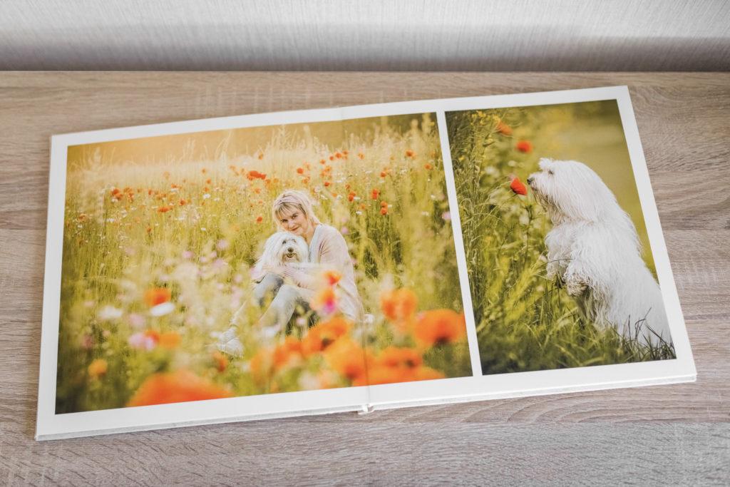 Innenseite eines Fotoalbums mit Hundefotos - Wandbild Tier